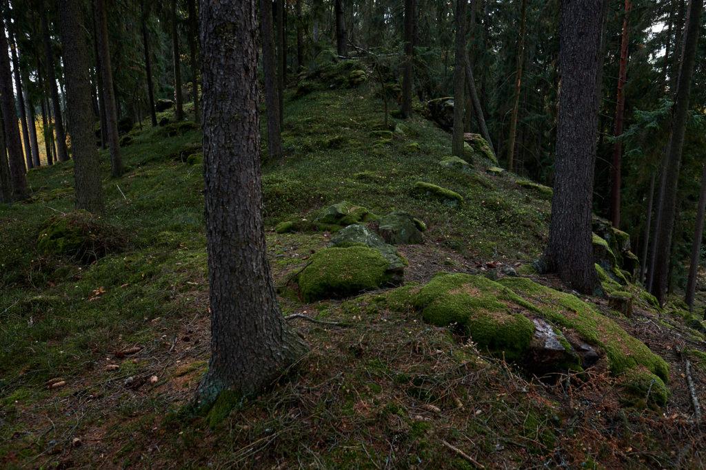 Za domem les