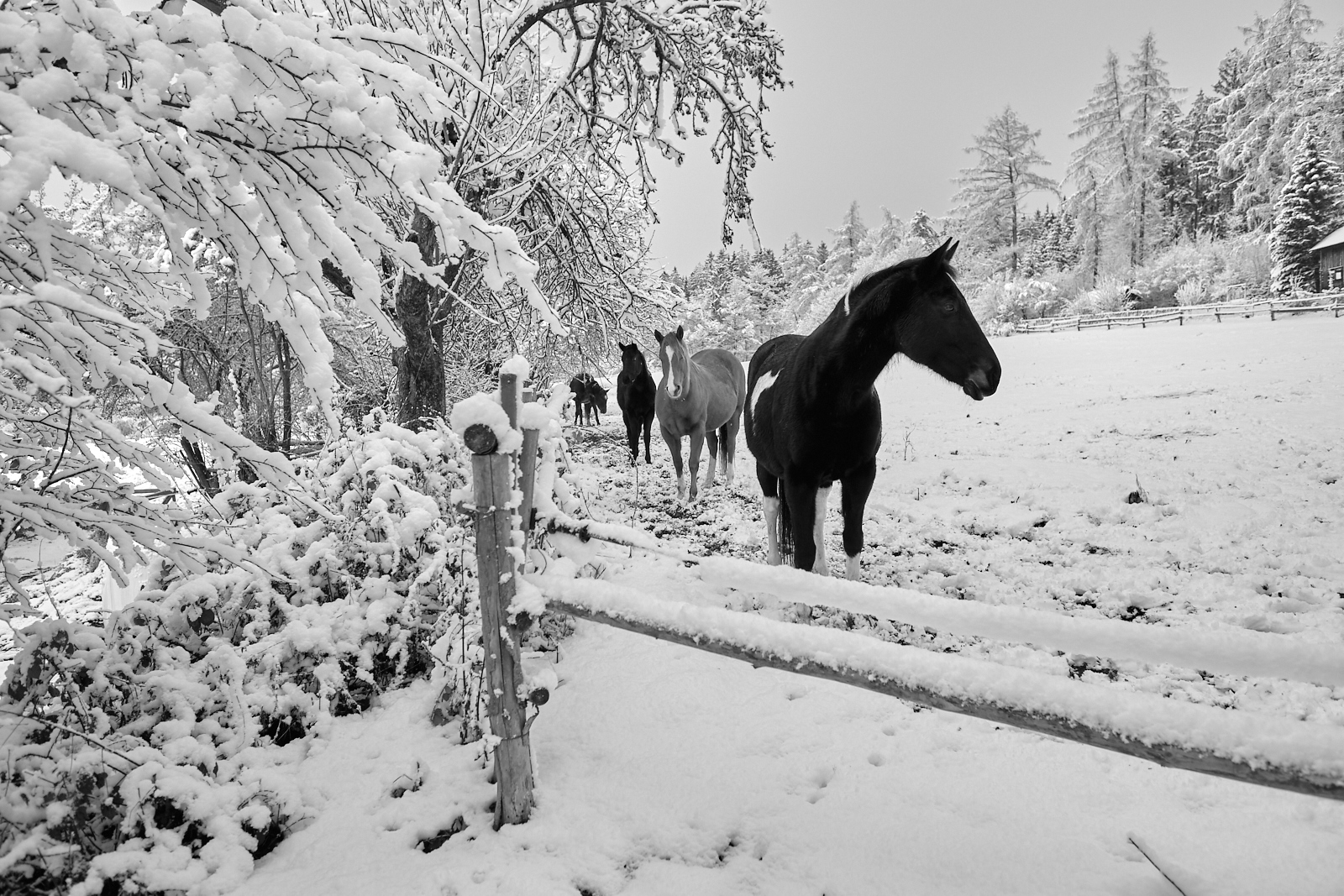 Cestou kolem ranče